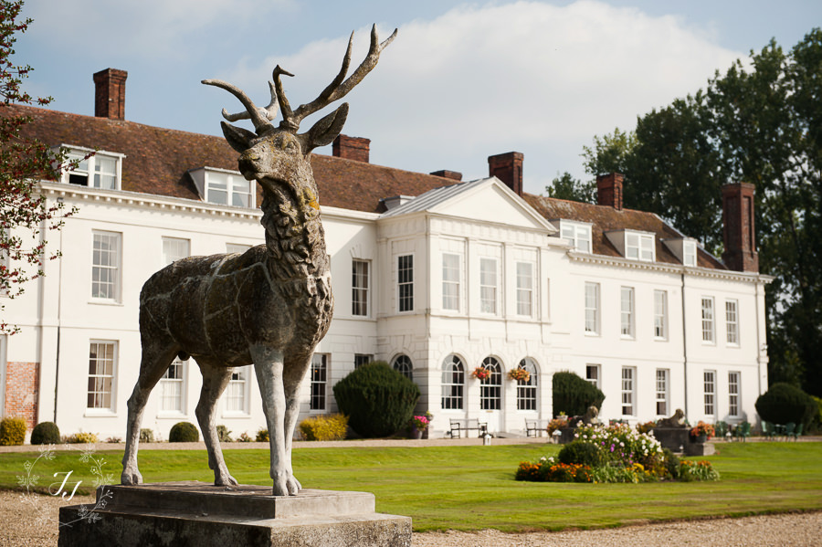 Stag at Gosfield Hall in front of the sun terrace